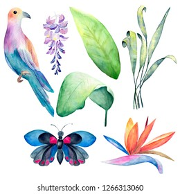 A hand drawn set of exotic plants and birds. Can be used for decoration of cards, invitations, parties, etc.