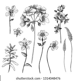 Hand drawn set of flowers and leaves of wild plants isolated on white background. Pencil drawing monochrome different floral elements.