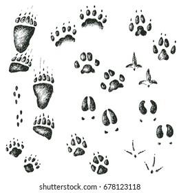 hand drawn set of walking wild wood animal and bird tracks