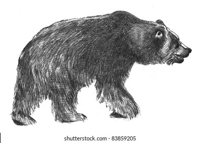 hand drawn sketch of big black grizzly bear in black ink isolated on white background, Ursus arctos horribilis