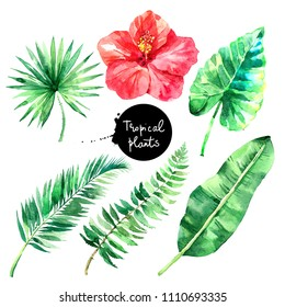 Hand drawn sketch watercolor tropical leaf set. Painted isolated exotic nature illustration