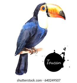 Hand drawn sketch watercolor tropical bird toucan. Painted isolated exotic nature illustration