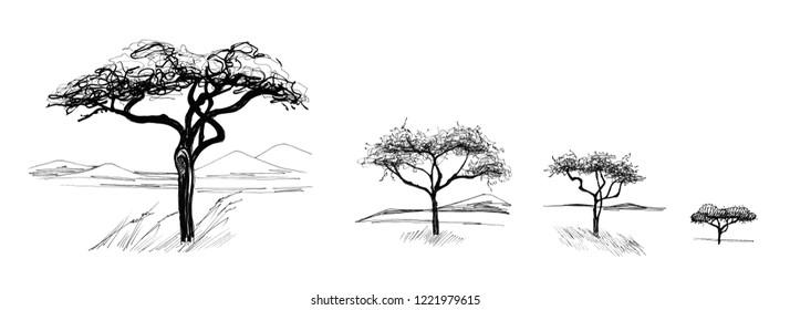 Hand drawn sketched african tree (originals, no tracing)