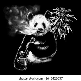 Hand drawn smoking panda on chalkboard for coffee shop. Realistic chalk drawing of chinese mammal. Real white isolated on black, not inverted from black ink illustration
