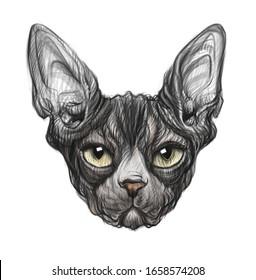 hand drawn sphinx  head. portrait