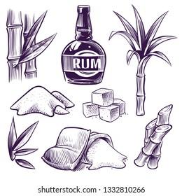 Hand drawn sugar cane. Sugarcane sweet leaves, sugar plant stalks, farm harvest, rum glass and bottle. Vintage engraving style