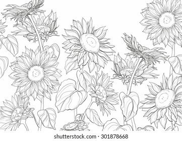 Sunflower Line Drawing Images Stock Photos Vectors Shutterstock
