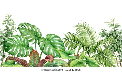 Hand drawn tropical plants. Seamless line horizontal border made with watercolor exotic green rainforest foliage on white background.