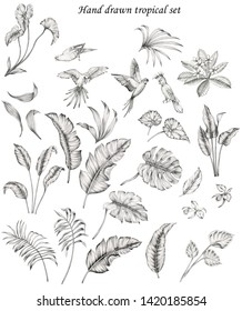 hand drawn tropical set with compilation of isolated tropical leaves, banana leaf, areca palm leaf, monstera, different foliage, flowers, orchids, sitting and flying parrots. Drawing with charcoal.