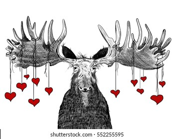 hand drawn valentines day illustration of funny old moose with hairy beard and red hearts hanging from huge antlers, cute fun animal character or comic cartoon for valentine, wedding, or love concepts