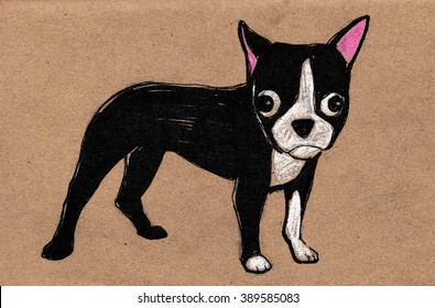 Hand drawn vector illustration or drawing of a Boston Terrier puppy cartoon dog