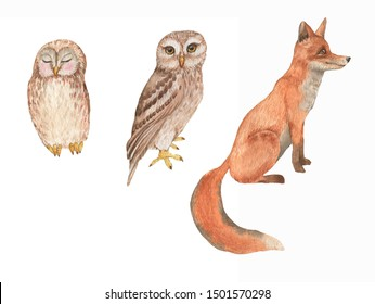 Hand drawn watercolor animals set. Cute owls and fox characters. Isolated animals