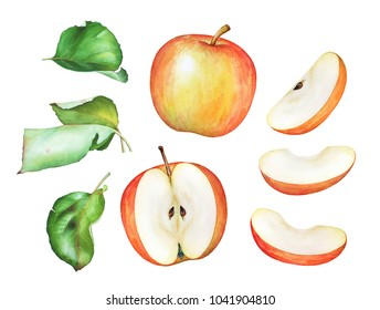 Hand drawn watercolor apples with green leaves isolated on white background.