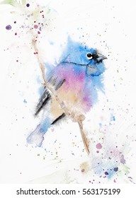 Hand drawn watercolor bird on a branch