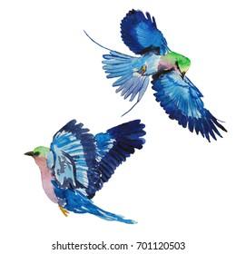 Blue Birds Images Stock Photos Vectors Shutterstock