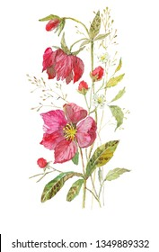 Hand drawn watercolor botanical illustration. Bouquet of hellebore blossom, raspberry twig and herbs. Isolated set on a white background for invitations, greeting cards. Flowers, berries and herbs