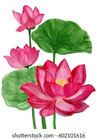 Hand drawn watercolor botanical illustration of Lotus flower pink. Element for design