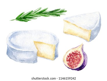 Hand drawn watercolor camembert french cheese set, with fig and rosemary, food illustration isolated on white background.