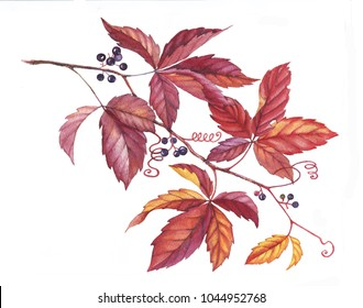 Hand drawn watercolor colorful and vibrant branch of the wild vine plant. Red, yellow, orange leaves on the branch