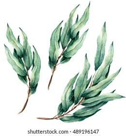 Hand drawn watercolor eucalyptus leaves set isolated on white.