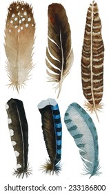 hand drawn watercolor feather set, raster illustration isolated on white