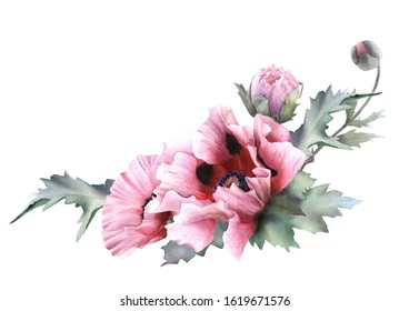 Hand drawn watercolor floral arrangement with picturesque pink garden poppies and green leaves isolated on a white background. Floral botanical illustration for wedding invitations, cards, patterns.