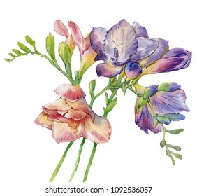 Hand drawn watercolor flowers. Anemones, Freesias. Bright colorful fullsize raster illustration.