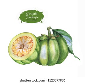 Hand drawn watercolor garcinia cambogia fresh fruit, isolated on white background. Healthy detox natural product superfood illustration