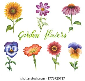 Hand drawn watercolor garden flowers isolated on white background. Set of floral elements: sunflower, pasies, petunia, coneflower, zinnia, cosmos