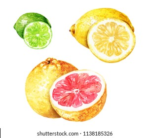 Hand drawn watercolor grapefruit, lemon and lime, delicious citrus fruits set with cut half isolated on white background. Food illustration.