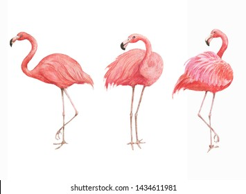 Hand drawn watercolor illustration with beautiful pink flamingo isolated on the white background