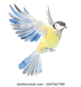 Hand drawn watercolor illustration of bird. Isolated on white. Titmouse