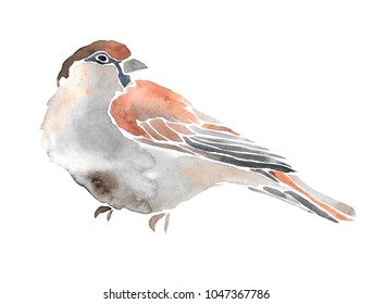 Hand drawn watercolor illustration of bird. Isolated on white. Sparrow