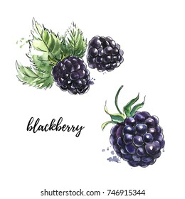Hand drawn watercolor illustration of Blackberry. Set of bright vibrant berries with leaves isolated on white background. Sketchy style with black ink outline and textured stain with splash
