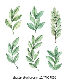 Hand drawn watercolor illustration. Botanical clipart with eucalyptus branches and leaves. Winter floral greenery. Perfect for wedding invitations, cards, prints, posters, packing