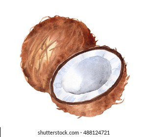 Hand drawn watercolor illustration of coconut on white background