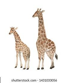 e46ff1e4d5b3f Baby Giraffe Images, Stock Photos & Vectors | Shutterstock