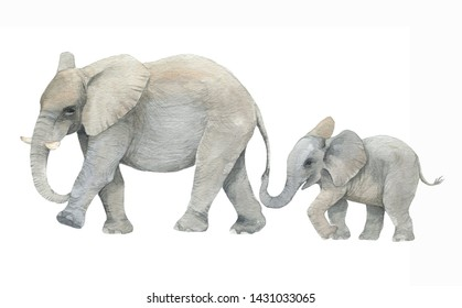 Hand drawn watercolor illustration with cute elephants. Baby and mother elephant isolated on the white background