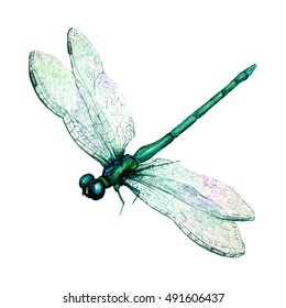 Hand drawn watercolor illustration of green dragonfly isolated on white background. Beautiful insect watercolor drawing in trendy vintage style. Flying dragonfly with transparent wings.
