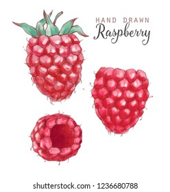 Hand drawn watercolor illustration of the healthy food. Raspberry isolated on the white background