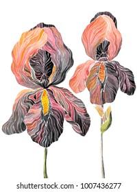 Hand drawn watercolor illustration with irises. Boho style, vintage, art nouveau