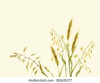 Hand drawn watercolor illustration. Meadow grass in yellow and green background. Ecological nature or organic product design.