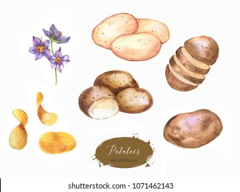 Hand drawn watercolor illustration set of fresh potatoes and potato chips. Isolated on the white background. Vegetarian food product.