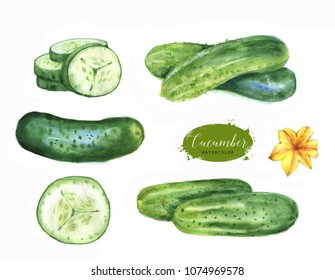Hand drawn watercolor illustration set of fresh green cucumbers. Isolated on the white background. Vegetarian food product