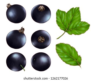 Hand drawn watercolor illustration set of the food: ripe tasty black currant, isolated on the white background