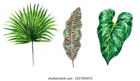 Hand drawn watercolor illustration, set of various tropical green leaves, isolated on white