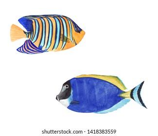Tropical Fish Images, Stock Photos & Vectors | Shutterstock