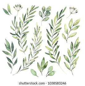 Hand drawn watercolor illustrations. Botanical clipart. Set of Green leaves, herbs and branches. Floral Design elements. Perfect for wedding invitations, greeting cards, blogs, posters and more