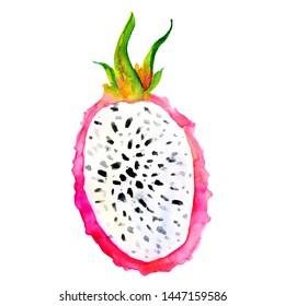 Hand drawn watercolor illustrations of dragon fruits pitaya isolated. Pitahaya sketch. Summer food illustration, tropical fruit. Healthy life style painting. Hand drawn clip art.