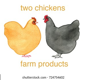 Hand drawn watercolor image of two chickens with writing in helvetica on white background. Orange and black chickens. Simple painting, no details